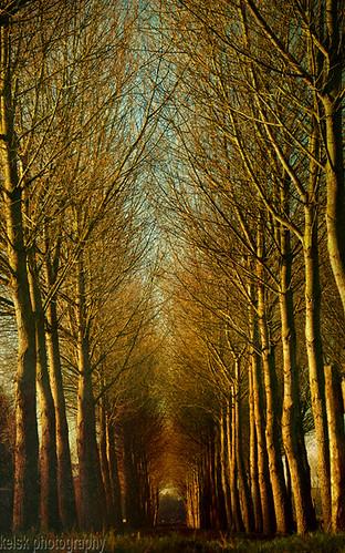 trees winter texture bomen alley zonlicht textuur delfgauw bieslandsebos bomenlaan magicunicornverybest magicunicornmasterpiece mygearandme kelskphotography rememberthatmomentlevel1 rememberthatmomentlevel2 rememberthatmomentlevel3 creativephotocafe besteverdigitalphotography