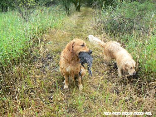 2012_09_01 - Kačení hon v Branišovicích