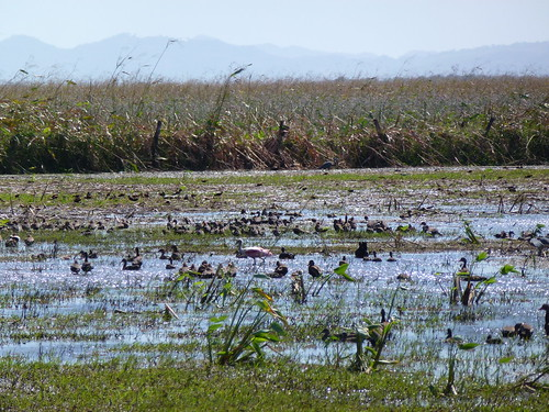 Parque Nacional Palo Verde - vogels