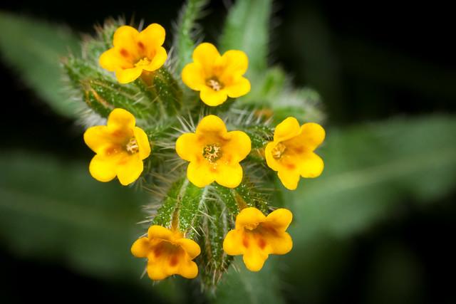 Weeds 3555