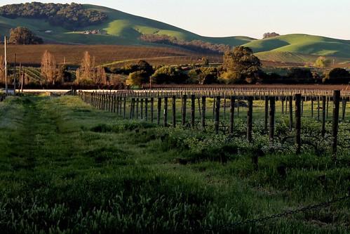 vineyard winecountry napacounty jamesoncanyon kirklandroad