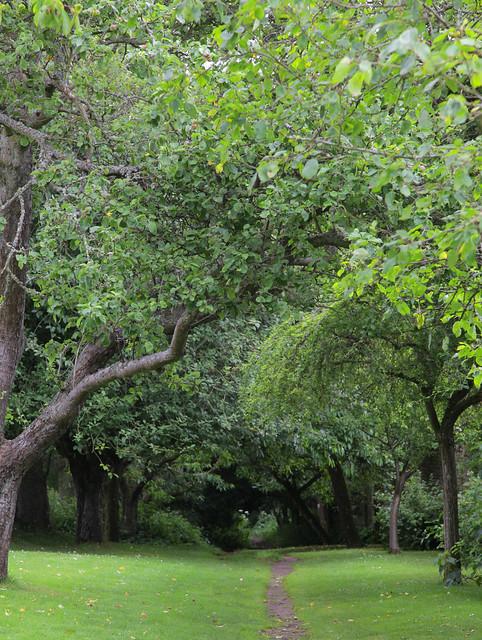 Woodland Walk @Wallington