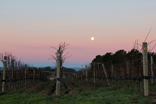 moon sunrise dawn vineyard napacounty jamesoncanyon