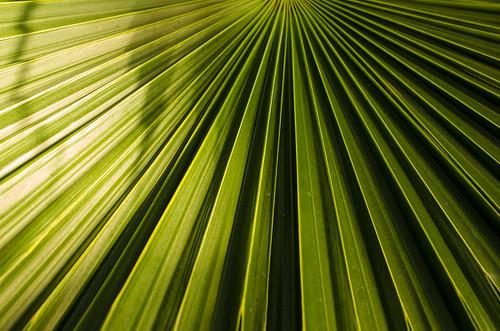 fern green leaves minnesota unitedstates saintpaul comopark marjoriemcneelyconservatory d7000 nikon40mm
