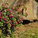 2013-01-28-123839_Tingambato-Tingambato por prinzipal