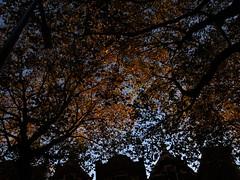 Rodenrijselaan leaves