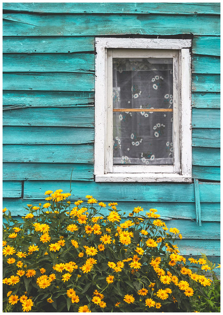 Window & Flowers, Bovina