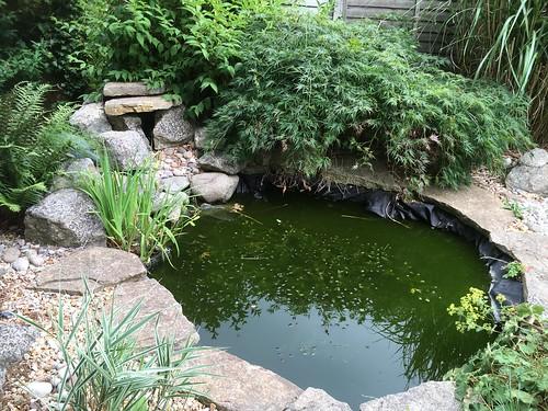 Pond clean Bishopstoke
