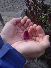 hands cupping flower