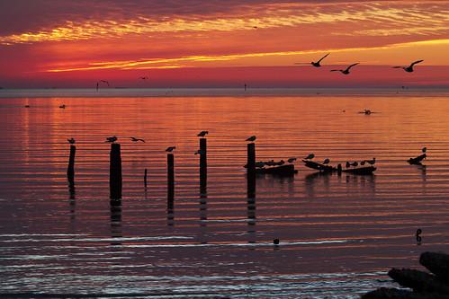 morning sky orange galveston water colors beautiful birds sunrise bay great serene piling