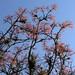 Red leaves and Bromeliads - Hojas rojas y Bromelias entre San Juan Tabaá y Villa Alta, Districto Villa Alta, Región Sierra Juárez, Oaxaca, Mexico por Lon&Queta