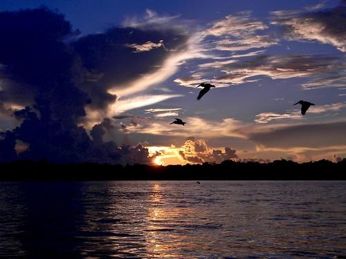 autumnal equinox sunrise pelican birds birding birdwatching migration dawn lakeworthlagoon estuary mullet northpalmbeach florida palmbeachcounty munyonisland nikon coolpix