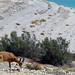 Okolí Masady, foto: Michaela Zoubková