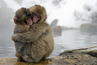 Snow Monkeys | by sitsgirls