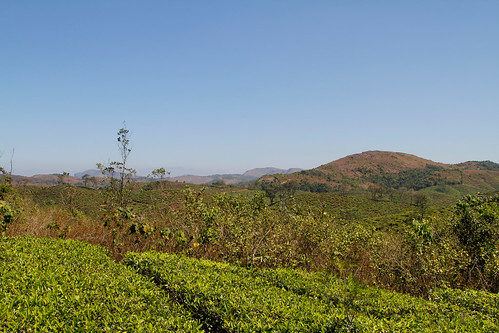 travel india holiday tourism nature outdoors landscapes tea culture kerala tee indien plantage