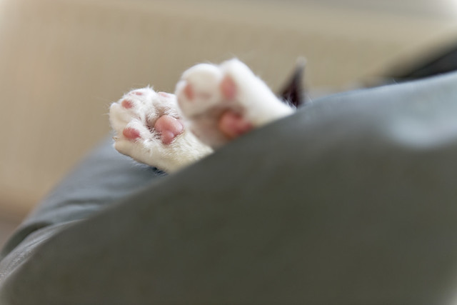 Lazy sunday afternoon - Cat paws