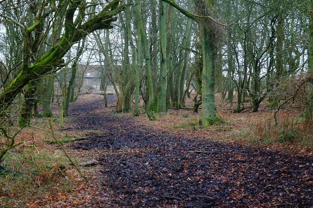 ashridge estate 025