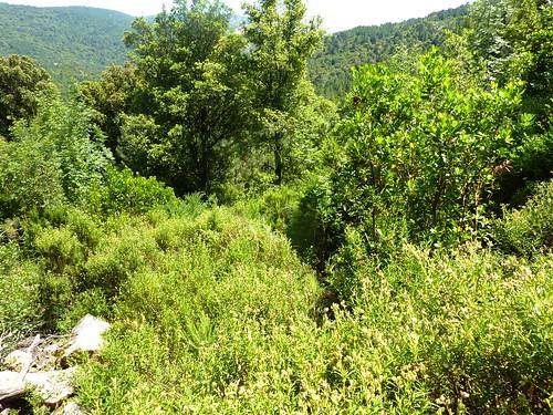A l'extrémité de la trace, départ du sentier vers le Cavu et la fntaine de Lora