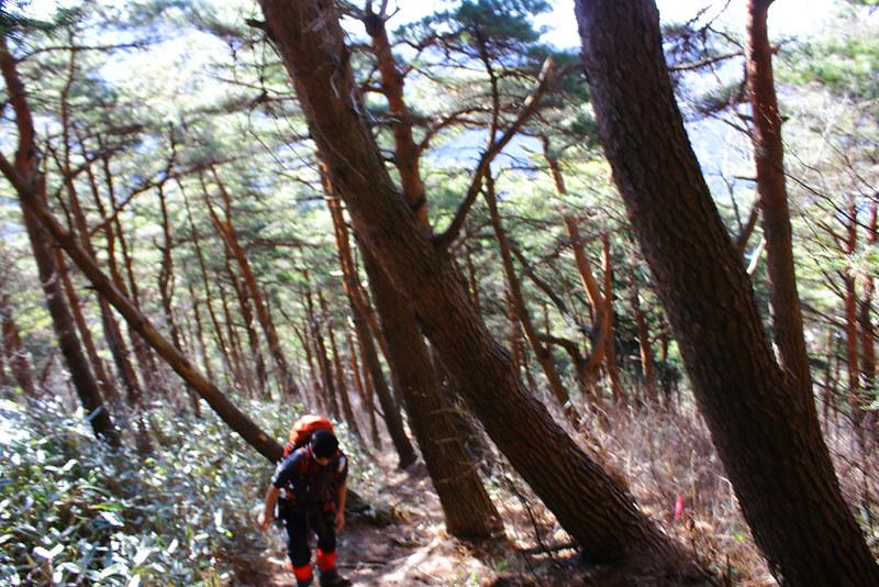20130113_十二ヶ岳_0011