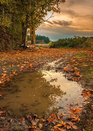 autumn sunset oregon trapped nikon october humor doom helvetia goldenhour 2012 d800 eveing
