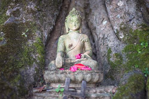 Budha bajo el árbol | by Carlos Adampol