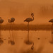 Flamingos in mistland... by Samyak (www.samyakkaninde.com)