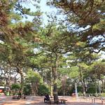 太宗臺松樹林