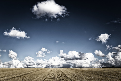 field wheat harvest warmington northants northamptonshire england uk