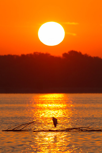 2016 canon eos7d horseshoelake illinois midwest september bird birds sunrise water pontoonbeach unitedstates us