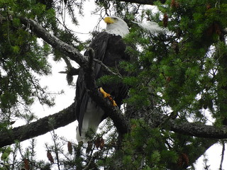 september 25 2016 16:36 - Dad in Hidden Beach Tree   by boonibarb