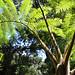 Una strana pianta con peluria in Los Quetzales