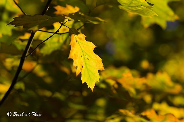 Autumn leaves at Freising