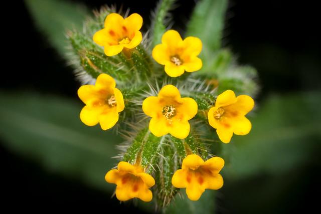 Weeds 3541