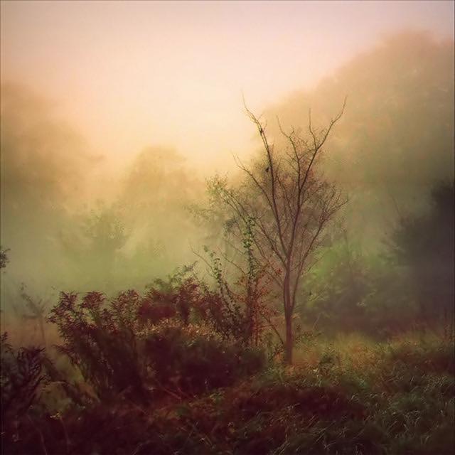 Lonely Tree (Mist)