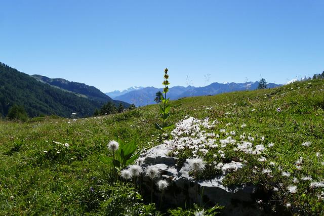 08.26.16.Valais - Montana