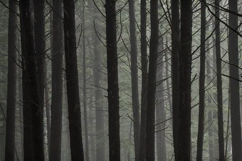 trees forest dark ma woods foggy trunks holyokerange deepwithin nearlithiaspringsreservoir