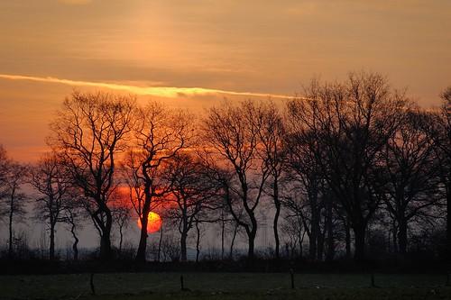 ostfriesland sonne eichen timmel wallhecken februar2013