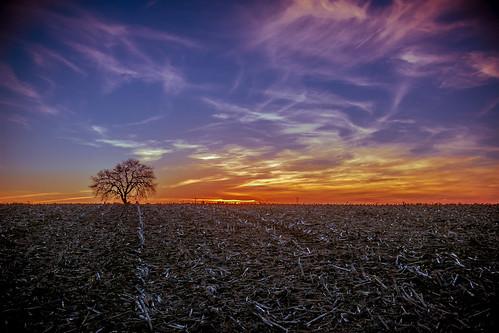 sunset nature field canon naturephotography canon24105f4is monocacybattlefield canon5dmkiii darshanvaishnav
