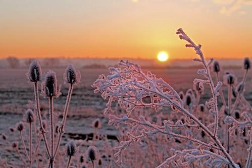 light sky cloud sun sunrise skyscape bedford frost bedfordshire felton frosted lumen cardington robertfelton