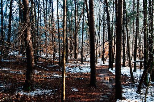 trees winter lake snow color ice water contrast forest sunrise nc pond woods melting north greensboro fantasy carolina brandt dreamy melt