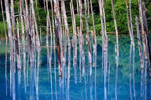 hokkaido summer 清池 白金溫泉 青い池 美瑛 aoiike blue pond biei
