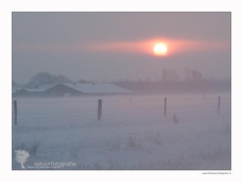 morning winter mist snow cold fog haze sneeuw haas ochtend uden koud leijgraaf hanskoster