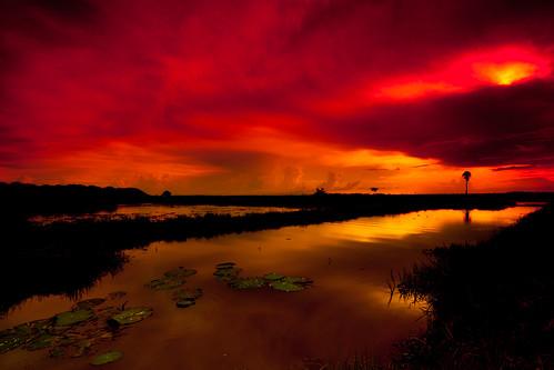 sunset red sea orange sun tree green water clouds cambodia rice palm step lillies siemreap padd