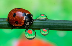 Bug with Droplet
