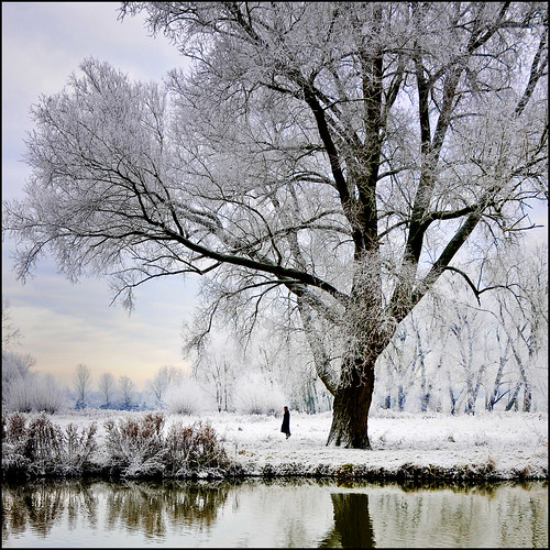 UK - Oxford - University Park - Cherwell reflections_sq