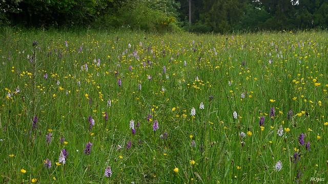 Feuchtwiese im Seidenbachtal