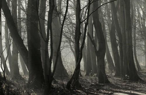 trees winter sunlight mist fog bomen rotterdam zonlicht schiebroeksepark