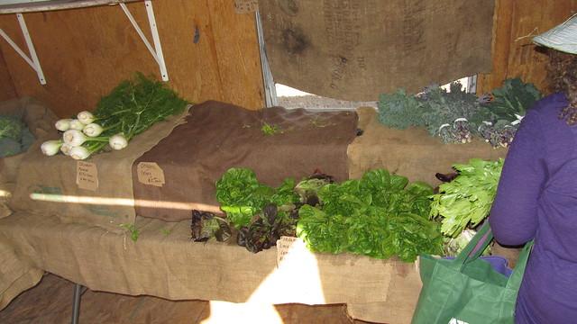 IMG_7125 Goleta Ellwood organic farm stand Langlo Ranch road lettuce