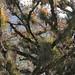 Forest full of Bromeliads - Bosque lleno de Bromelias; entre San Juan Tabaá y Villa Alta,  Región Sierra Juárez, Oaxaca, Mexico por Lon&Queta