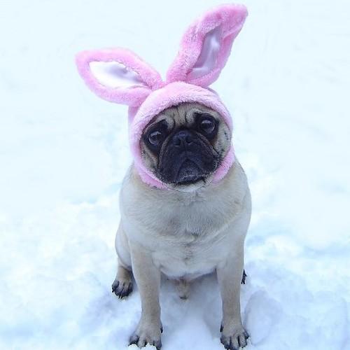Funny Pug Easter Bunny